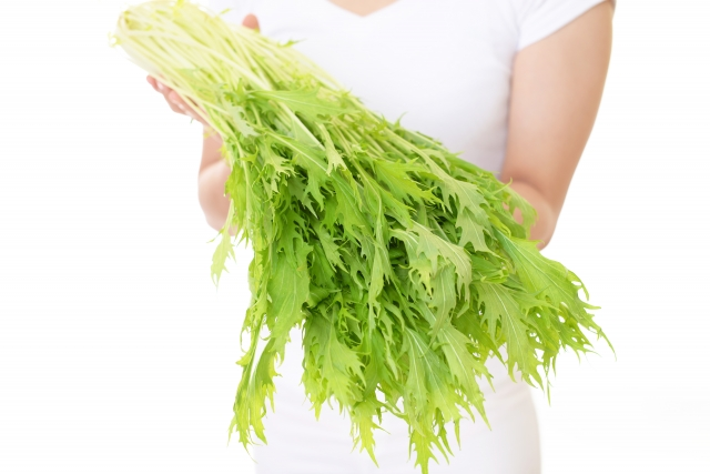 水菜,保存方法,冷凍